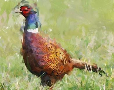 pheasant_FotoSketcher