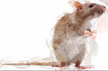 ratty-1